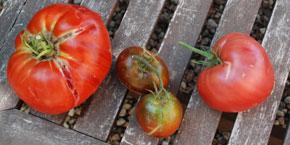 tomates-de-gauche-a-dte-gea