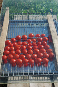 tomates-seches-grille,-vitr