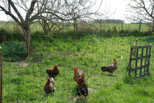 poules-mission-insecticide-